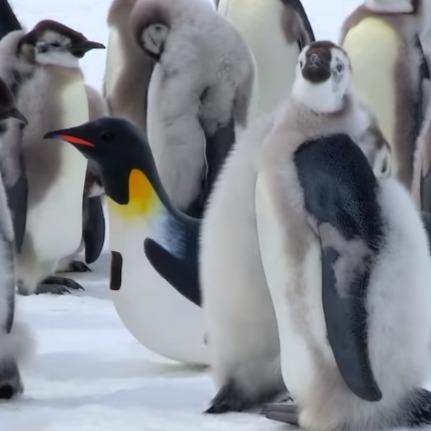 コウテイペンギンロボット1