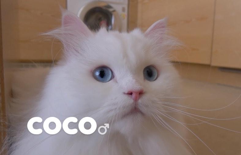 ネコ写真2