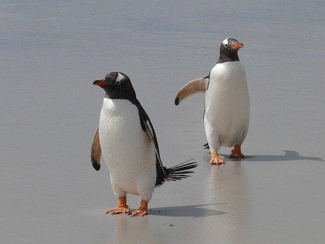 ジェンツーペンギン写真
