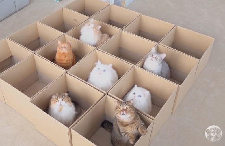 ネコ写真8